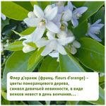 Профиль Цветок_апельсина