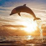 Профиль Дочь_дельфина