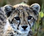 Профиль Gepard_AD