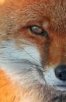 Профиль Big_fox