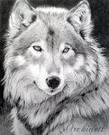 Профиль Dark_Lonely_Wolf