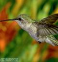 Профиль Птичка-не-неугомошка