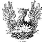 Профиль Phoenixx