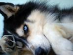 Профиль static_dog