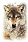 Профиль Wolf_Shadow