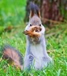 Профиль Crusher_Squirrel