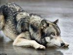 Профиль Alexandr_Wolf