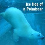 Профиль Polarbear