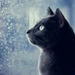 Профиль Tanita_Cat