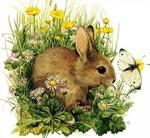 Профиль rabbit17