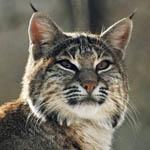 Профиль Wild_Katze