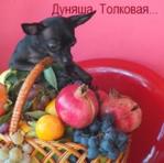 Профиль Дуняша_Толковая