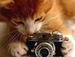 Профиль Кошка64