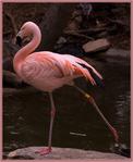 Профиль Фламинговина