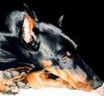 Профиль Doberwoman