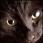 Профиль ~Чёрная_кошка~