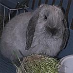 Профиль Christofer_BuBu_Long_Ears