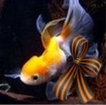 Профиль Елена-рыбка