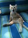 Профиль Cat_Kebab