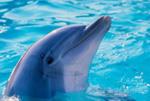 Профиль delfinn