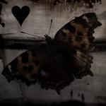 Профиль Void_Heart