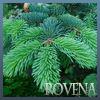 Профиль l_rovena