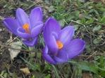 Профиль ветренный_апрель
