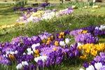 Профиль Шафрановая_весна