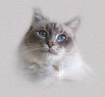 Профиль Кошкины_Мысли