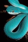 Профиль Sveta_Snake
