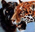 Профиль Black_Jaguar
