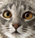 Профиль настоящий_Котёнок